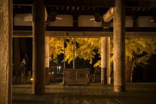 新宮熊野神社長床紅葉ライトアップ