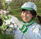 りんごの花見