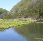 尾瀬の春を先取りミニ尾瀬公園