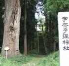 自然の生命力 宇奈多理神社の老杉